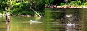 (no title) (Maryland DNR Weekly Fishing Report Overview | May 15, 2013)
