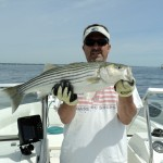 (no title) (Maryland DNR Weekly Fishing Report Overview | June 05, 2013)