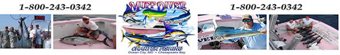 Muff Diver Sportfishing Charters
